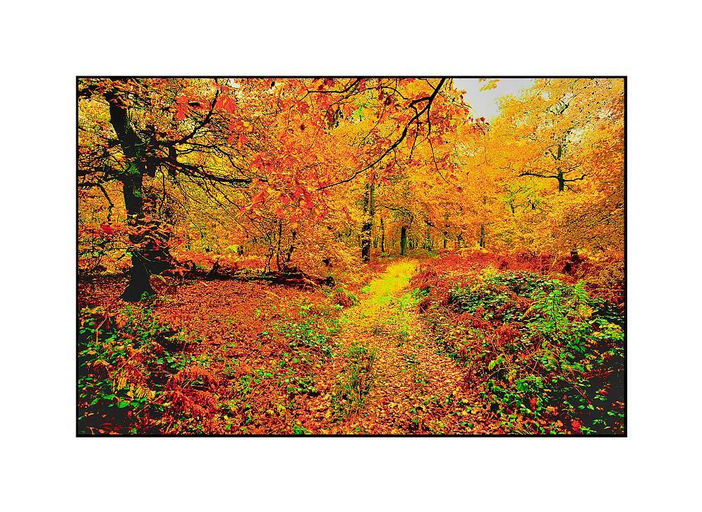 Waldweg, Diersfordt