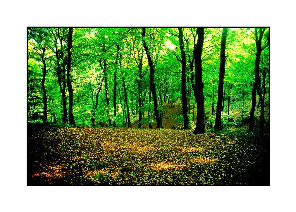 Waldschlucht, Xanten-Marienbaum