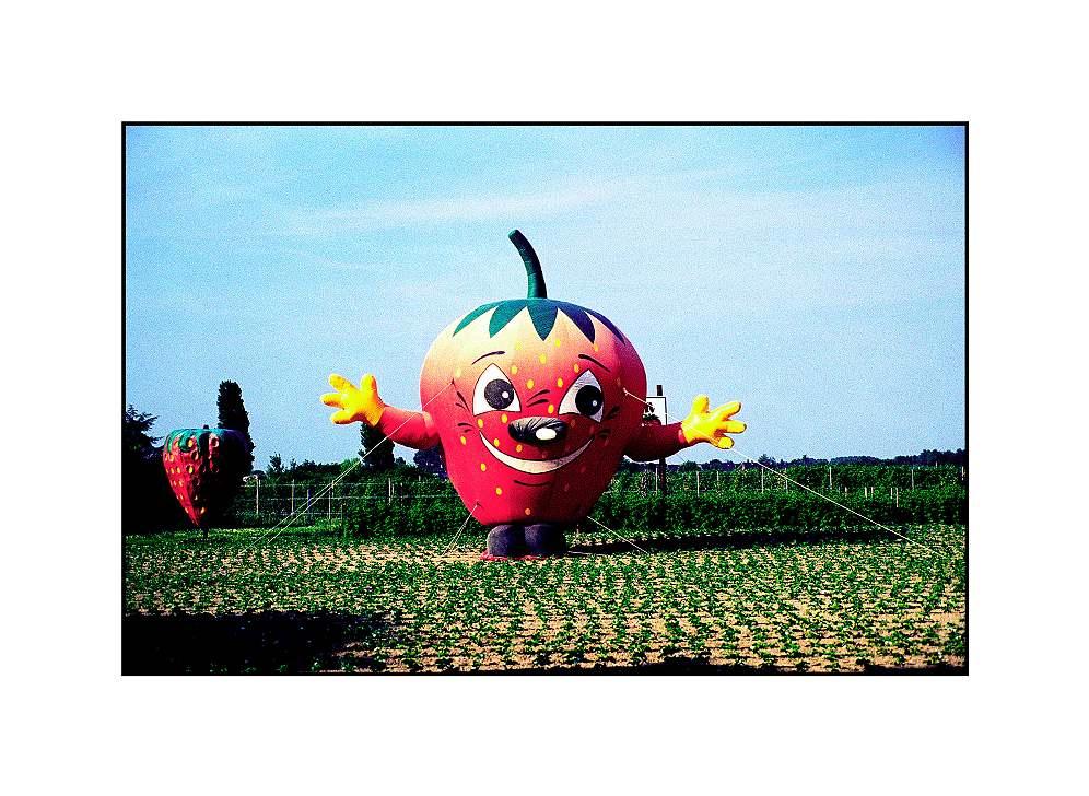 Erdbeere, Xanten